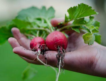 12 Fresh Cranberry Recipes – Gallery